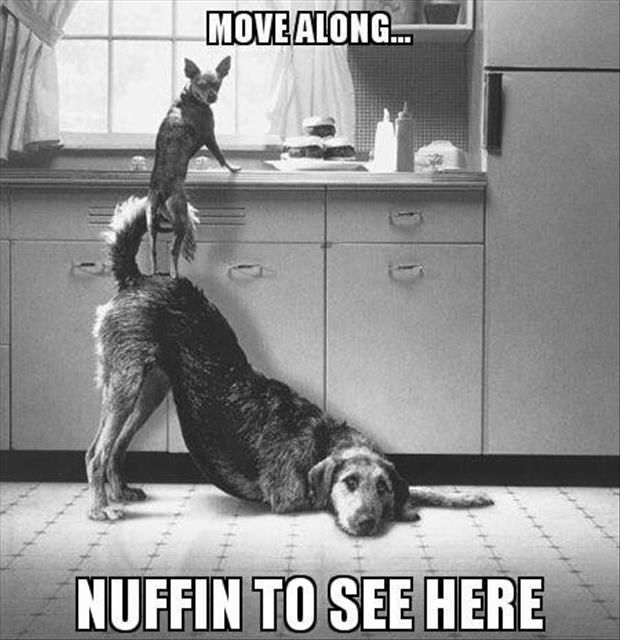 move along nothing to see here funny dogs
