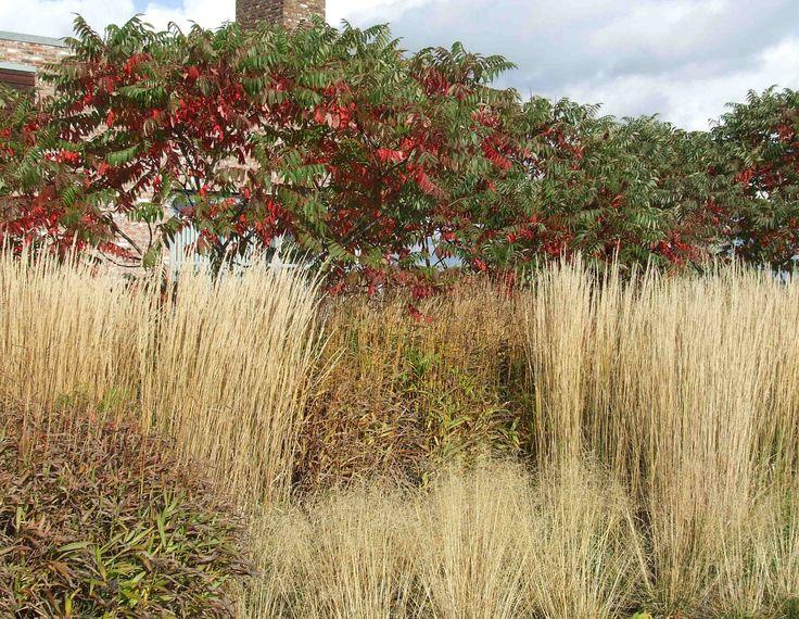 Piet oudolf hummelo tuinen van piet oudolf pinterest for Piet oudolf fall winter spring summer fall