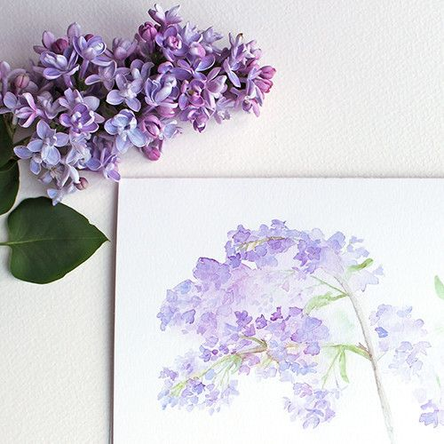 This beautiful set of spring flower note cards features three of my floral watercolor images. You will receive one card each of 'Crocuses', 'Lilacs' and 'Forget-me-nots'. I have printed my botanical i