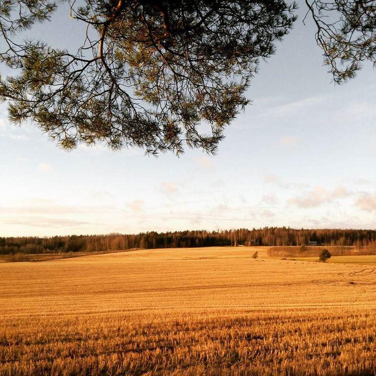 Hmmm... Tällainen joulumaisema meillä etelässä  This year we had a brown christmas... #pelto #field #livinginthecountryside #nature #sky #clouds #cloudporn #instasky #instadaily #calm #bestoftheday #field #igfinland #thisisfinland #igscandinavia #visitfinland #christmas #christmas2016 #joulu #joulu2016