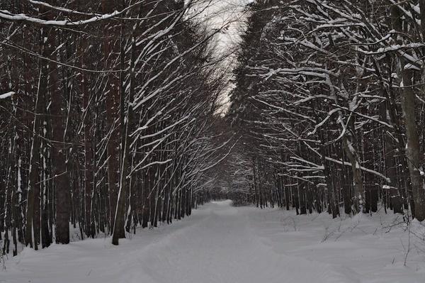 Las w bieliźnie - z cyklu drewno