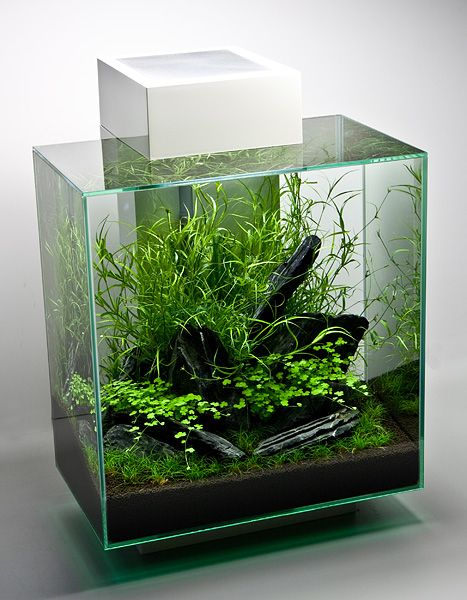 Aquarium Living Room Decor: A Small Plants Only Fish Tank