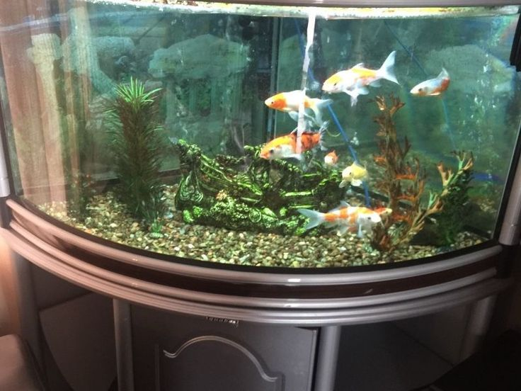 Rent Aquarium - #London's most reputed #affordable rental #aquarium provider! Our range