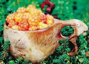 The arctic cloudberries. You can find them from middle Finland up to Lapland