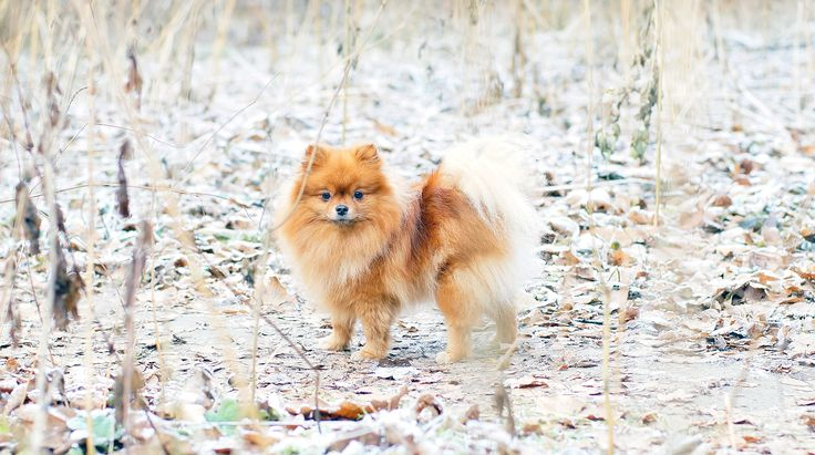 Winter and MiniSpitz