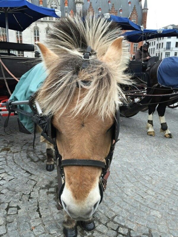 17 Best Images About Horse And Cart On Pinterest Gypsy