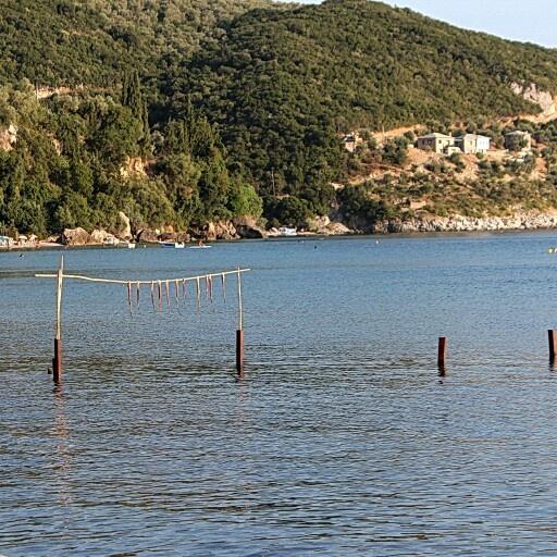 Lefokastro, Argalasti, Pelion, Greece. Octopuses hanging to dry before grilling.