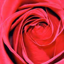 https://www.flowerwyz.com/discount-flowers-flower-deals-flower-coupons-cheap-flowers-free-delivery.htm  Click Here For Discount Flowers  Discount Flowers,Flowers.Com Coupon,Flower Coupons,Flowers.Com Coupon Code,Flower Deals