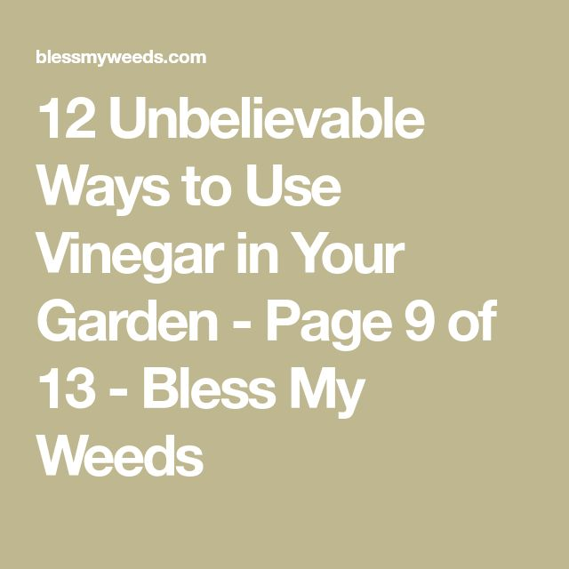 12 Unbelievable Ways to Use Vinegar in Your Garden - Page 9 of 13 - Bless My Weeds