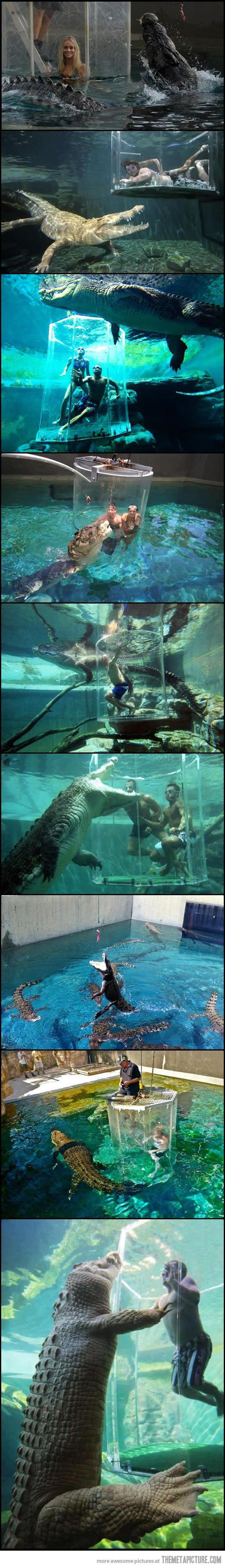 A terrifying place where you can swim with crocodiles…