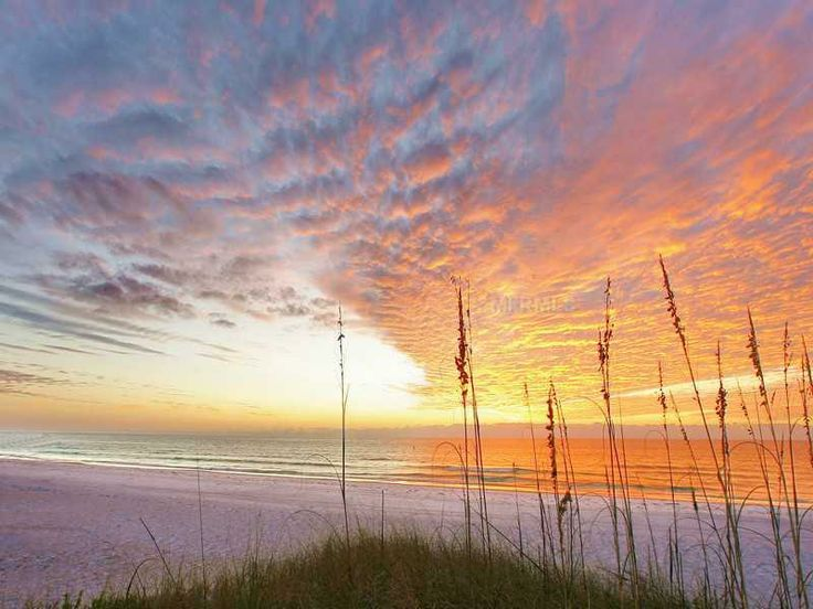 989 Best Beach Bound Images On Pinterest