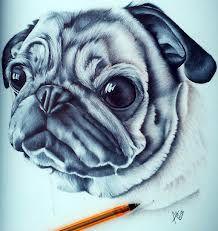 ballpiont drawing of pug