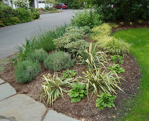 17 Best Images About Low Maintenance Yards I Like On