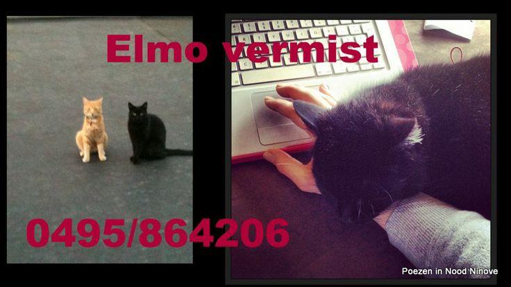 Elmo vermist! 0495/86 42 06