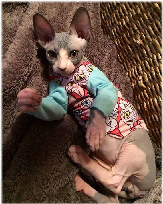 Cat Clothes Mother Sphynx Cat Head Hearts T-Shirt Long Sleeve Cat sweater custom gift Pet Clothes aqua red black Chinese Crested Dog Mother  TO BUY: Click the link in our bio to shop directly.  Direct purchase link: http://ift.tt/2fuUyEy  A beautiful textile created by master fabric designer Rene Laigo-drawings of multicolored sphynx heads on a red background with aqua accents aqua sleeves to match. The fabric is printed to order for us and is truly unique!  Soft cotton stretch material is…