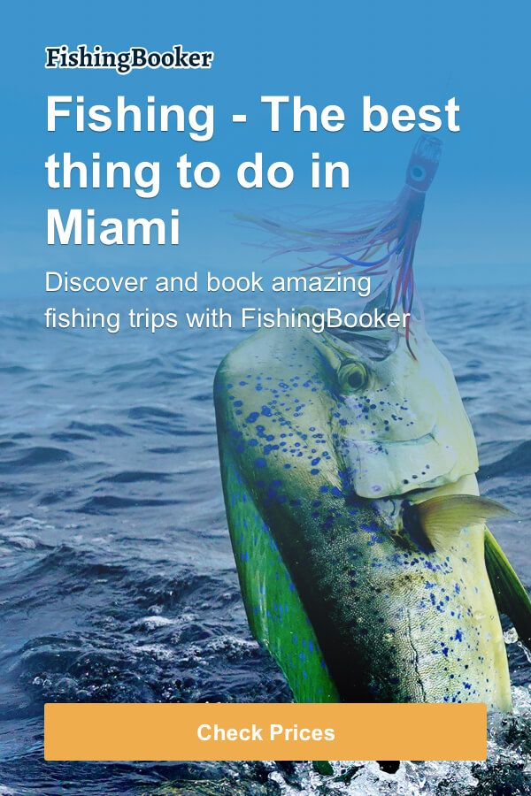 Book the Best Miami Florida Fishing Charters Online Now! Fast, Easy & Secure.