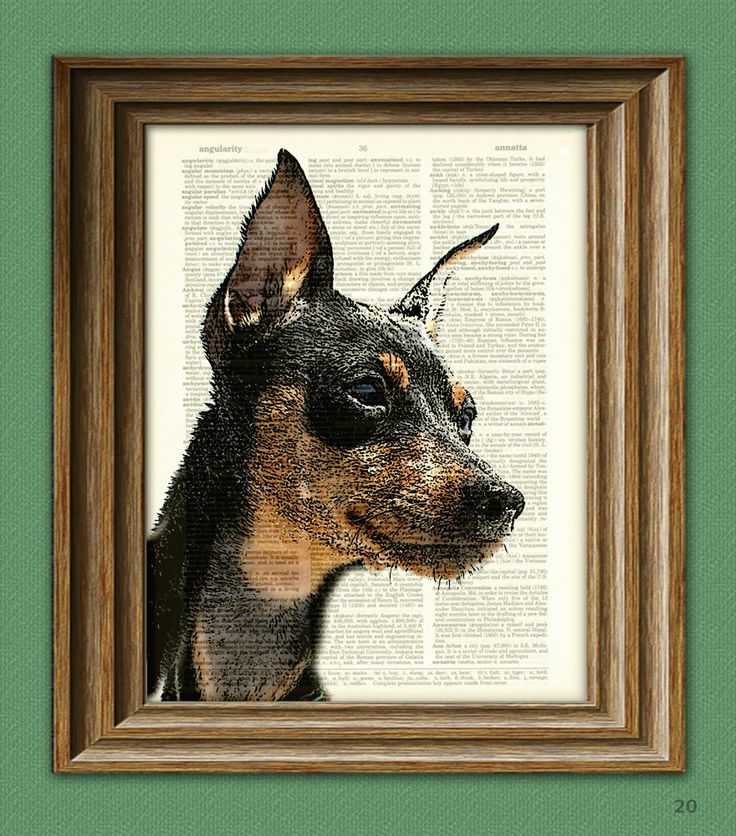 Miniature Pinscher Min pin dog beautifully upcycled vintage dictionary page book art print. $7.99, via Etsy.  Great detailing!