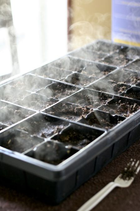 Everything you need to know about seed starting, including a seed starting soil recipe