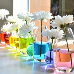 Create an inexpensive and easy centerpiece using food coloring and simple white flowers in bud vases.