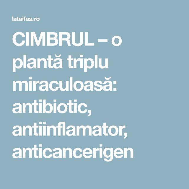 CIMBRUL – o plantă triplu miraculoasă: antibiotic, antiinflamator, anticancerigen