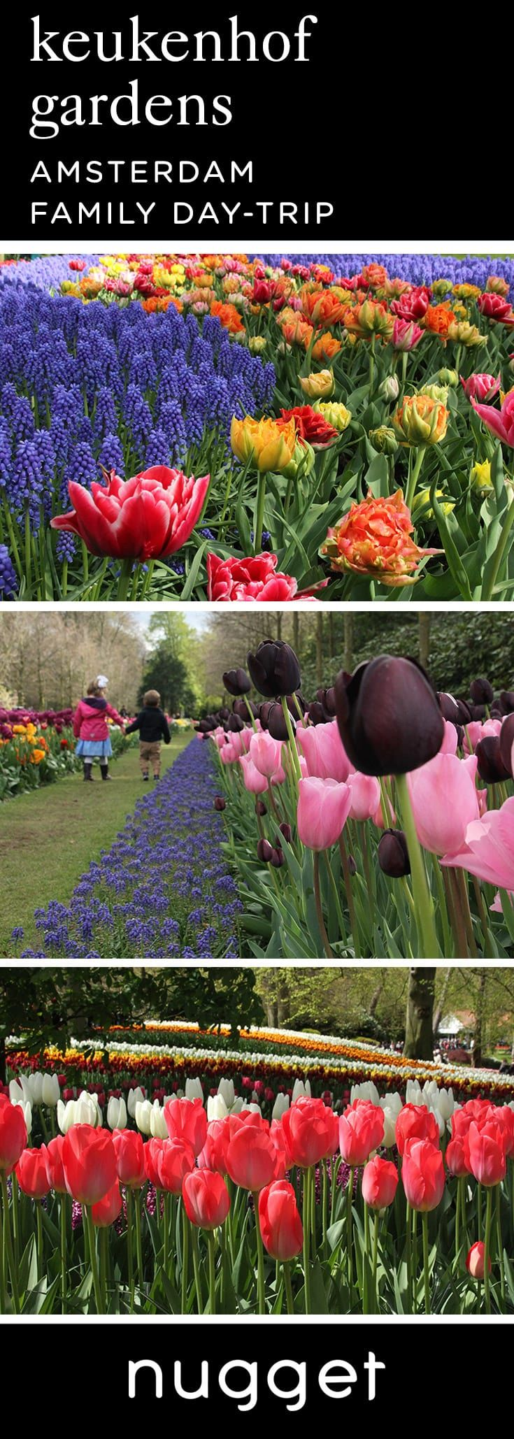 An Amsterdam day-trip itinerary. Take in the sea of flowers at Keukenhof Gardens, then head to Zandvoort Beach for a fun-filled day in the Netherlands. #FamilyTravel #TravelItinerary #Netherlands