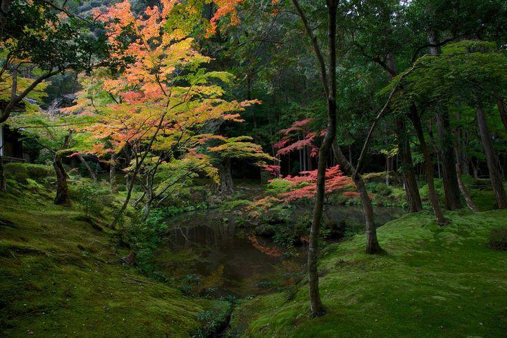 Saihō-ji, the famous moss temple of Kyoto 作者 Jean-Marie Hullot