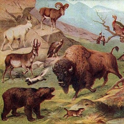 Which animals of the Old World are the most closely related to those living in the New World? those living in subarctic climate! Since North America and Asia had been connected by the Bering land bridge, a number of animal and plant species were able to colonize both continents. Today, similar species are distributed throughout the taiga biome on both continents.