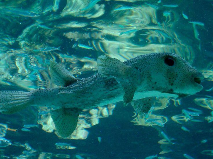 Beautiful fish. Xcaret aquarium, Riviera Maya, Mexico.