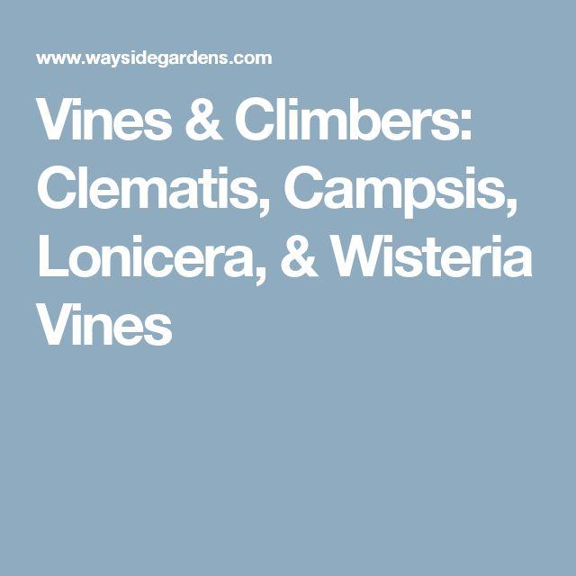 Vines & Climbers: Clematis, Campsis, Lonicera, & Wisteria Vines
