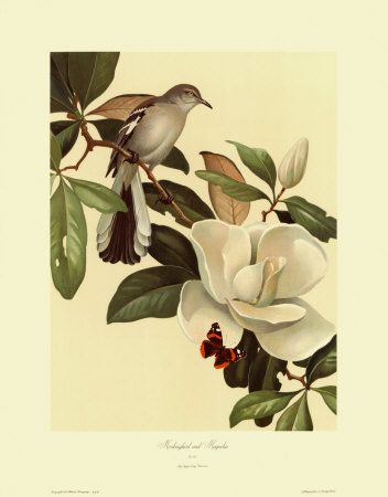 134 Best Magnolias Images On Pinterest