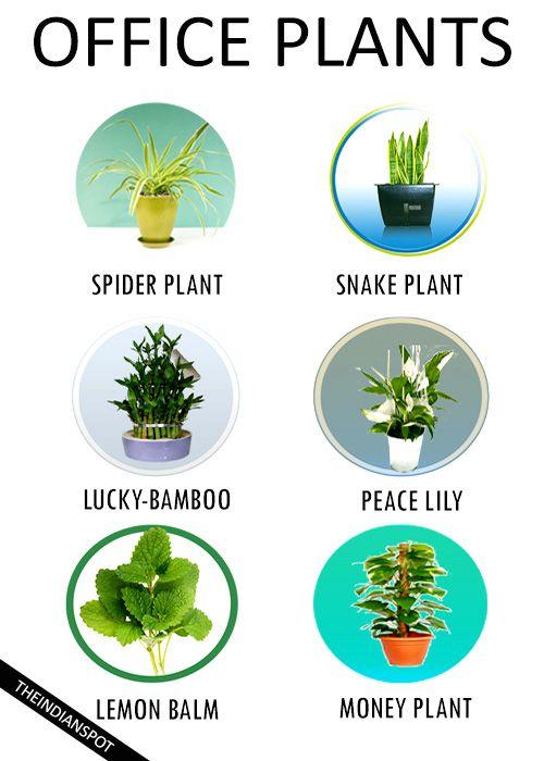 The 25 Best Best Office Plants Ideas On Pinterest Best