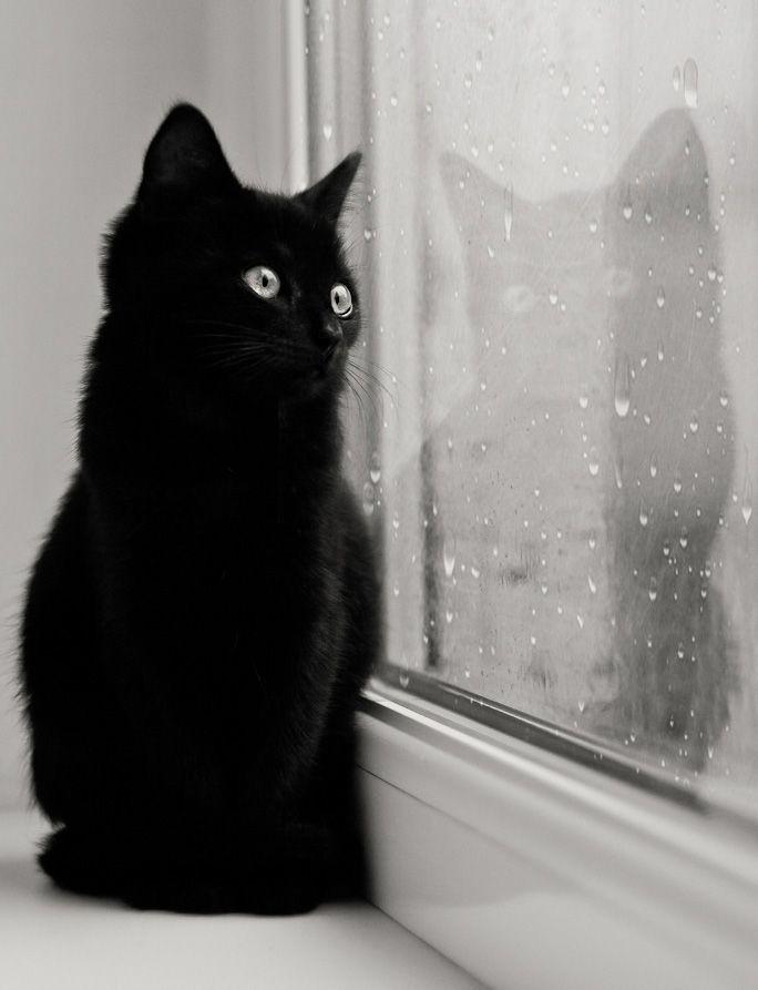 вас скучаю картинки черная кошка произошла рядом
