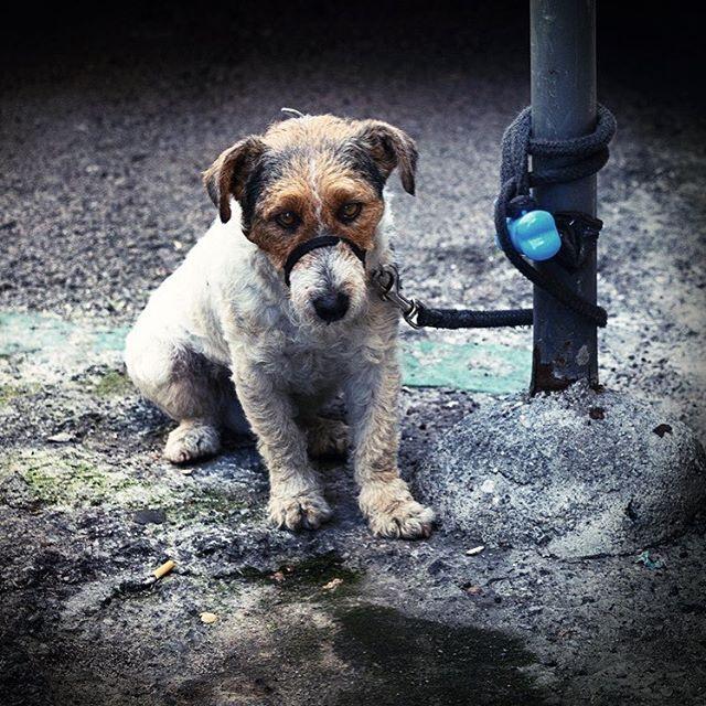 Así se quedan nuestros perritos cuando entramos en las tiendas 😢Ellos tb tienen derecho a entrar y darnos su opinión sobre qué debemos comprar. Al fin y al cabo es nuestro mejor amigo, y esos no engañan 😉 Fotografía de @botikario . #fotografia #photography #photooftheday #instaphotos #fotodeldia #dogs #perritos #saddog #shopwithyourdog #shopping #goshopping #irdecompras #walkyourdog #yourbestfriend #tumejoramigo #perro #doglife #dogstagram #instagood #instaphoto #instadog #beautyblog…