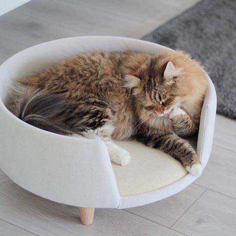 Nook Nookdesign Pl Zdjecia I Filmy Na Instagramie Cats Animals