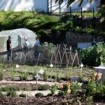 The new Urban Freedom Greenhouse at OZCF.  Cape Town, South Africa. http://urbanfreedom.co.za/2013/08/ozcf-installation-greenhouse-envy/