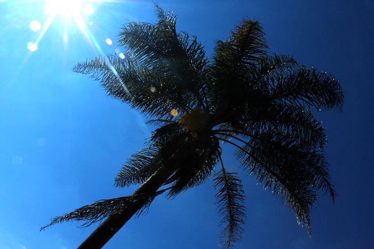 Sun, Palm