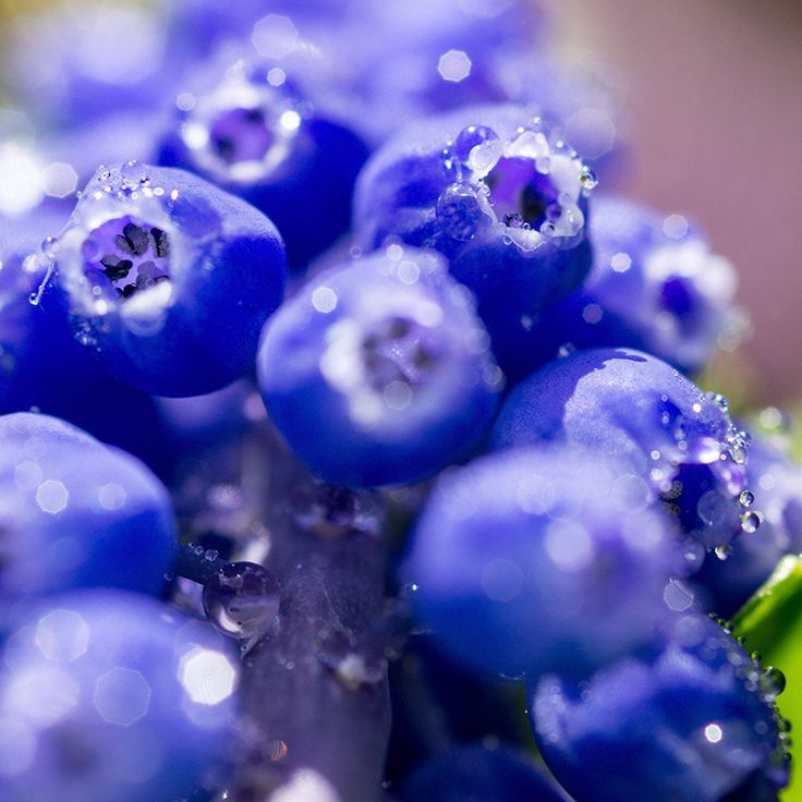 Więcej w galerii: http://fototesty.pl/blog/412_maj-kwiatami-obsypany.html