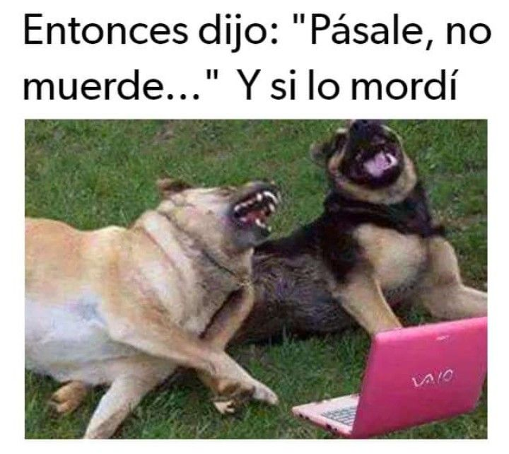 Pin By E On Memes Divertidos Funny Dog Memes Dog Memes Funny Dogs