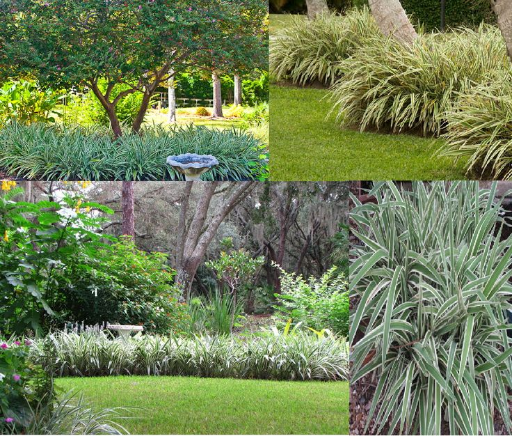27 best images about rear yard plants on pinterest sun for Low growing plants for flower beds