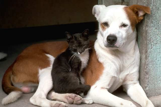 The Truth About Aging Cats VS Aging Dogs #HillsPet
