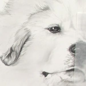 Learn how to draw dogs from this step-by-step demonstration on realistic pet portraits from Carrie Stuart Parks.