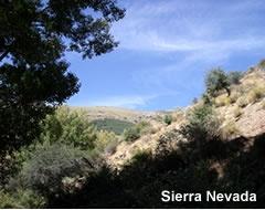 Sierra Nevada - Almeria