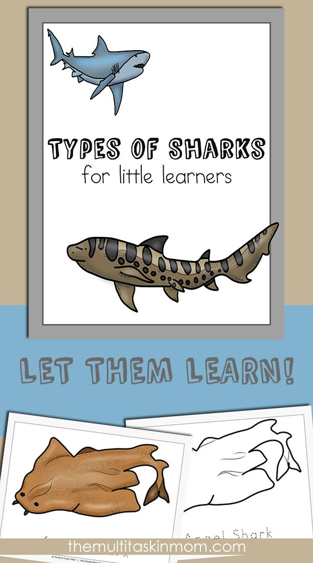 Types of Sharks For Little Learners is Perfect for your PreK Students