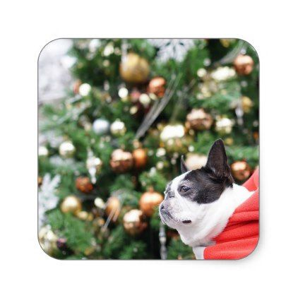 Boston Terrier Pug Dog Christmas Square Sticker - christmas craft supplies cyo merry xmas santa claus family holidays