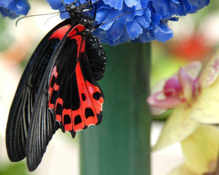 La Casa delle farfalle in 5 città italiane Casa delle #FARFALLE: in Italia ce ne sono almeno 5. Ecco un elenco dettagliato di tutti i luoghi dove ammirare i lepidotteri di tutto il mondo. #TURISMO #VIAGGO