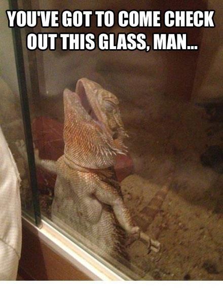 funny pics jpg: Beards Dragon, Funny Pics, Funny Humor, Funnies, Funny Photo, Funny Faces, Glasses Man, Tiny Pet, Funny Lizards Glasses Happy
