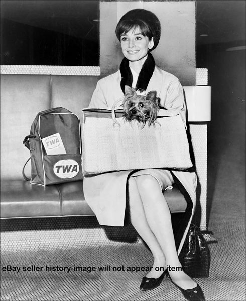 Audrey Hepburn at Idlewild Airport holding Famous, her Yorkshire Terrier