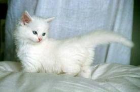 I'm a Cat ^-^