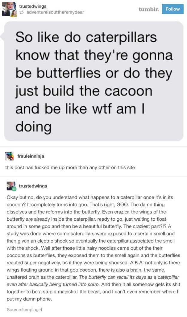 """Caterpillars basically <a href=""""https://go.redirectingat.com?id=74679X1524629&sref=https%3A%2F%2Fwww.buzzfeed.com%2Fandyneuenschwander%2F17-tumblr-posts-that-are-funny-but-will-also-teach&url=http%3A%2F%2Fphenomena.nationalgeographic.com%2F2013%2F05%2F14%2F3-d-scans-caterpillars-transforming-butterflies-metamorphosis%2F&xcust=4534051%7CBFLITE&xs=1"""" target=""""_blank"""">turn into goo</a> when becoming a butterfly."""