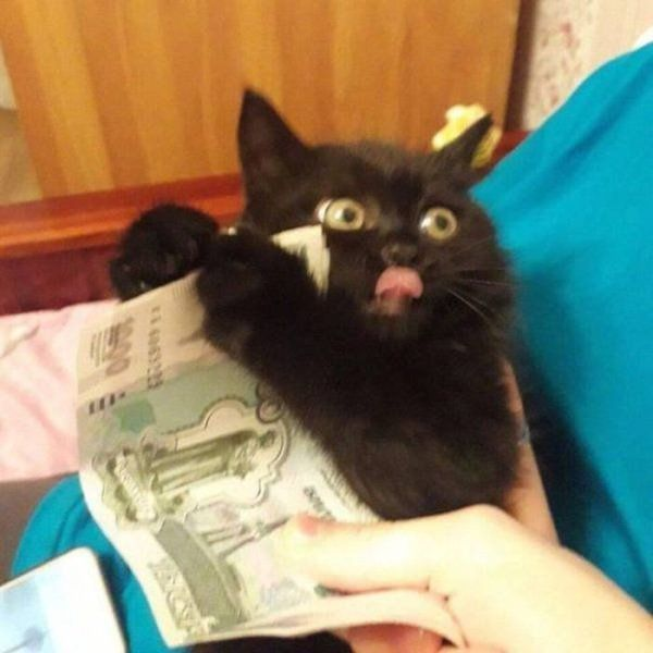Funny Cat – 30 Pictures